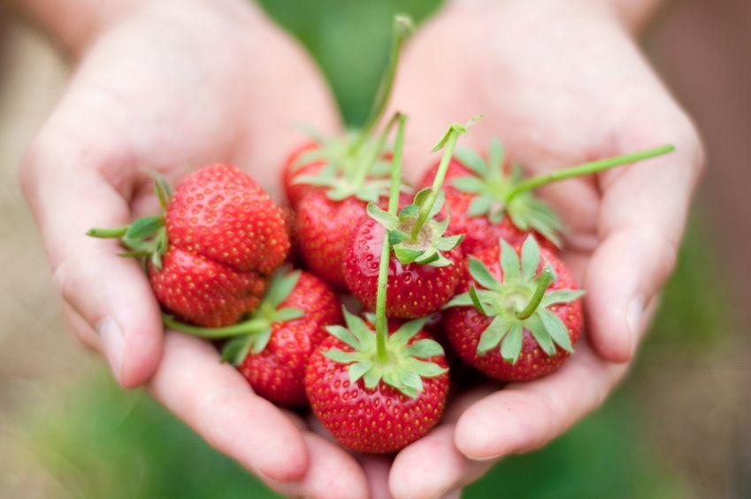 Llena tu hogar de fresas