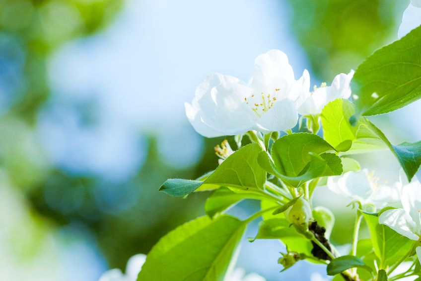 Nuestra primavera huele a jazmín