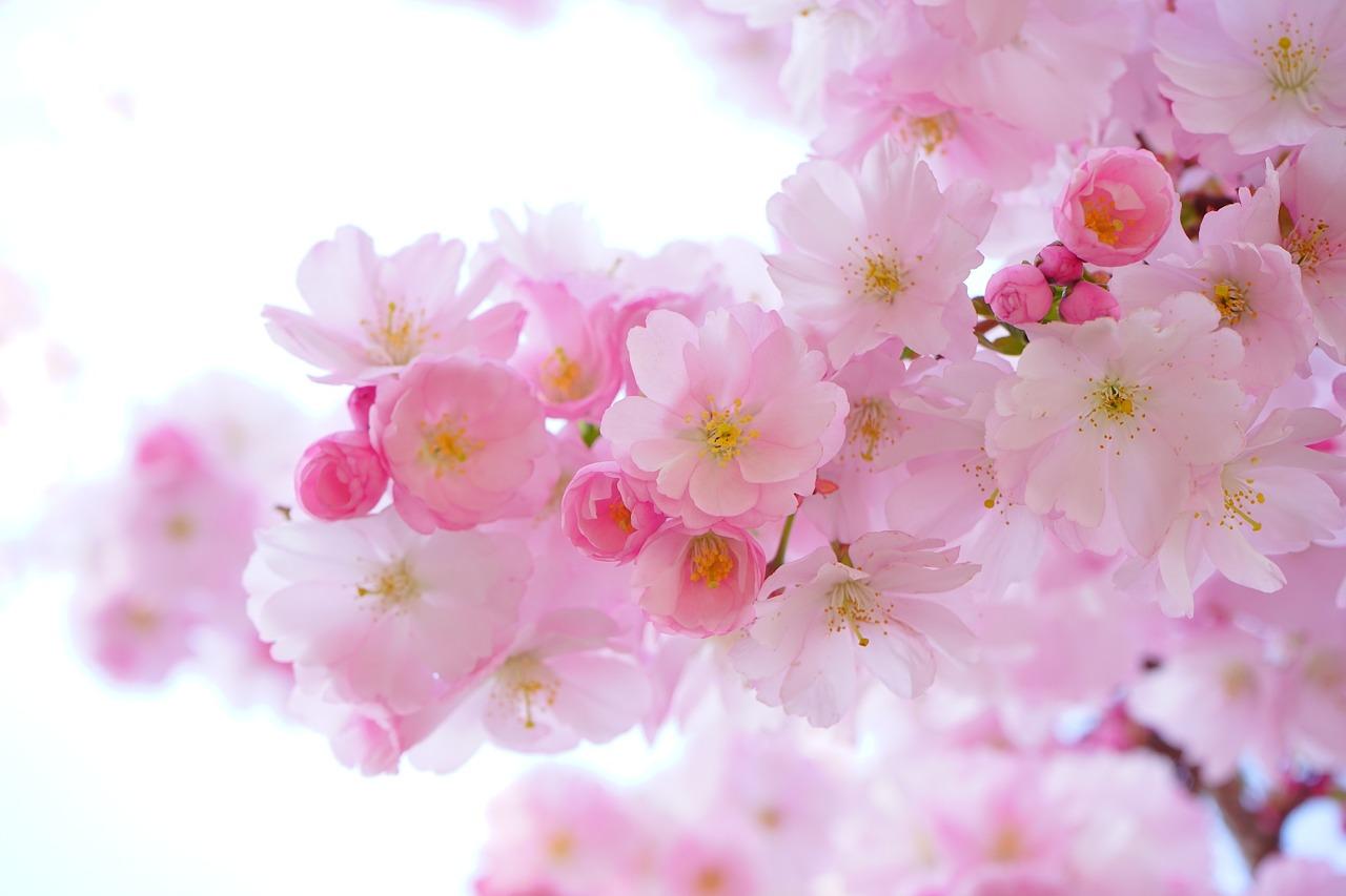 Qual é a tua fragrância floral?