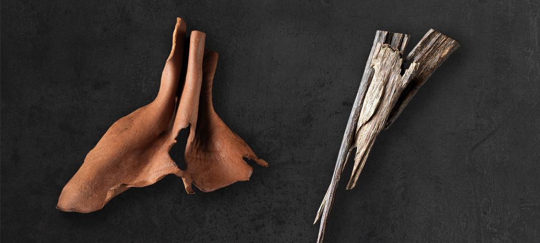 Oud e Couro: tesouros da perfumaria