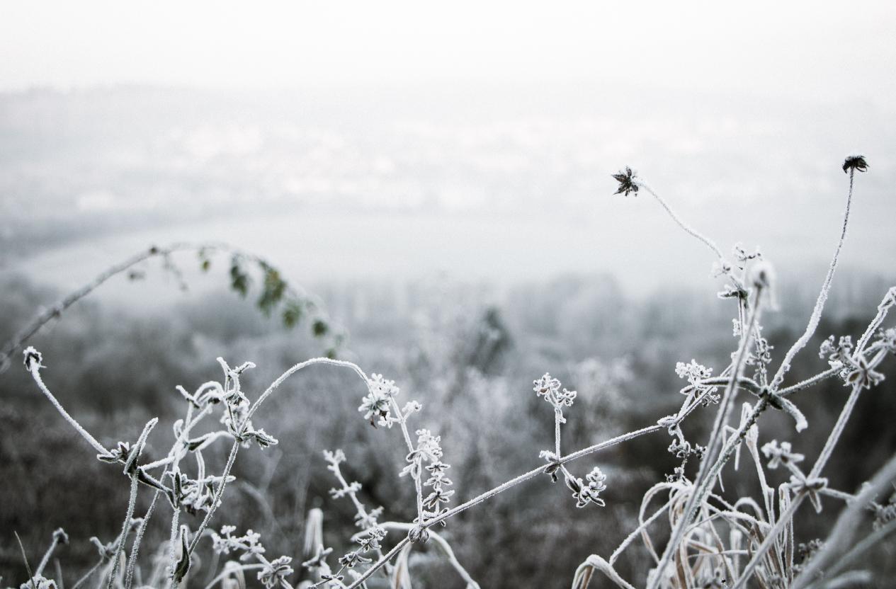 Aromi per combattere il freddo!