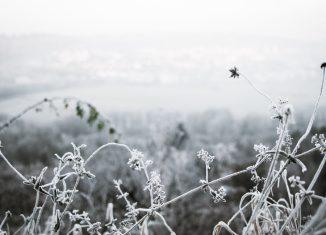 Aromas-para-combatir-este-frio-polar-blog-Equivalenza
