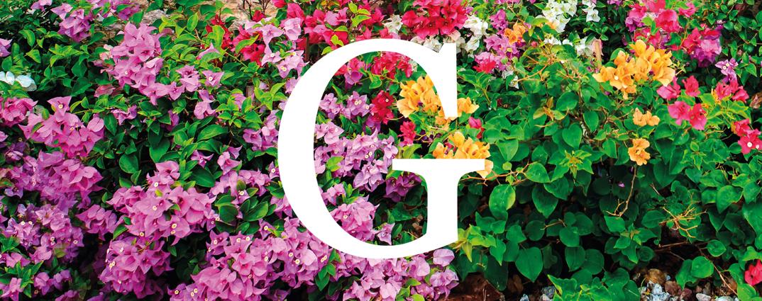 Garden Collection, la esencia de esta primavera