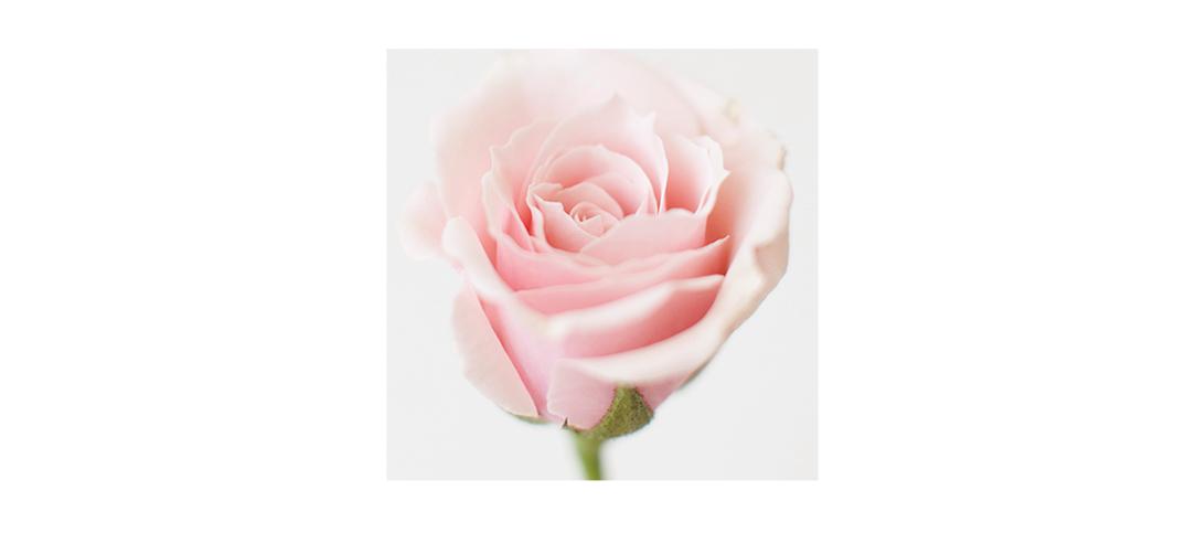 144 l'eau en Rose: reinventiamo un grande classico di Primavera!