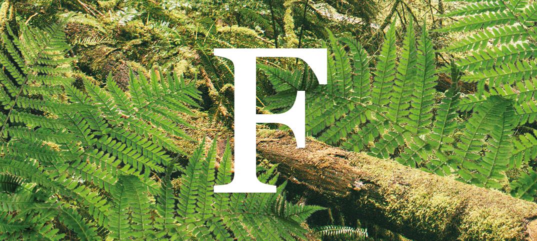 Já está disponível a nova coleção de perfumes Forest Collection!
