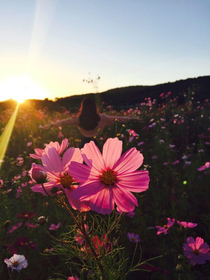 Un perfume para cada ocasión. Flor de color rosa en medio de un prado con una chica en el fondo.