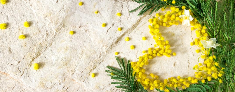 A mimosa perfuma o Dia Internacional da Mulher