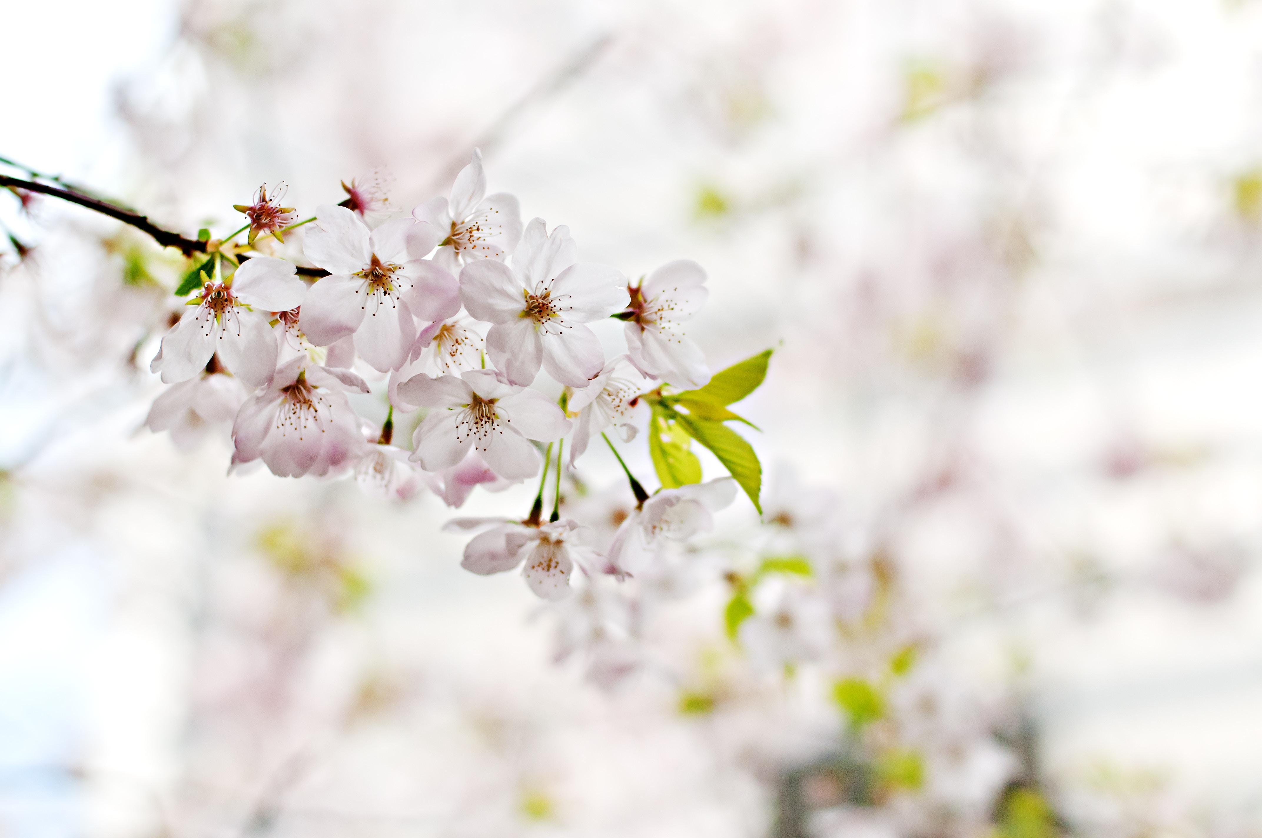 Os aromas influenciam as emoções?