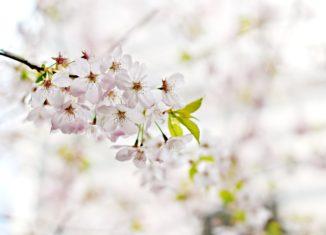 ¿Los olores influyen en las emociones?