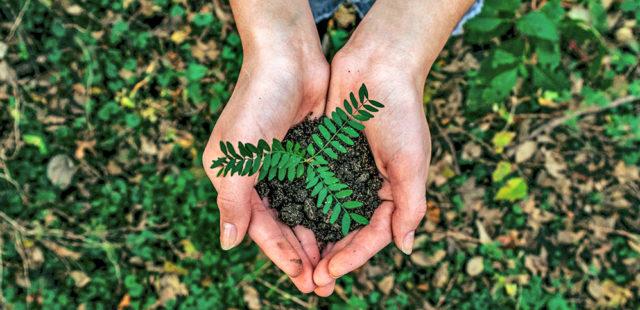 5 gestos simples que ajudam a cuidar do ambiente