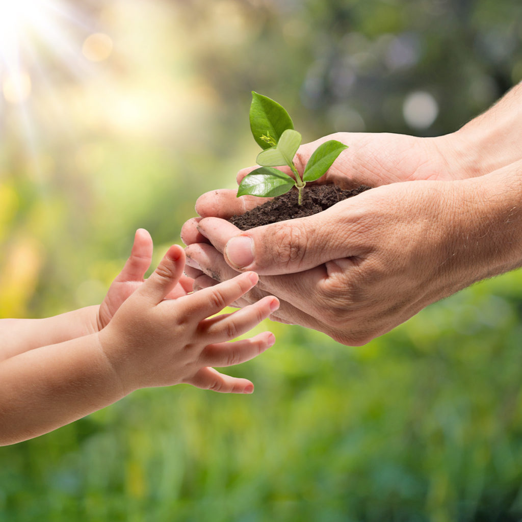 equivalenza actividades y manualidades para toda la familia plantar